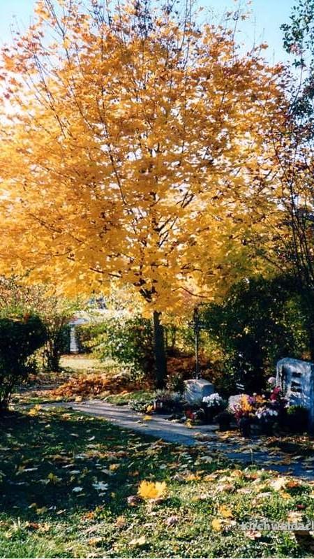 Bild des Ortsweiher Kirchenfriedhofs mit Baum